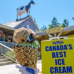 Cows Ice Cream PEI